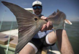 Apalachicola fishing st george island fishing report for Apalachicola fishing report